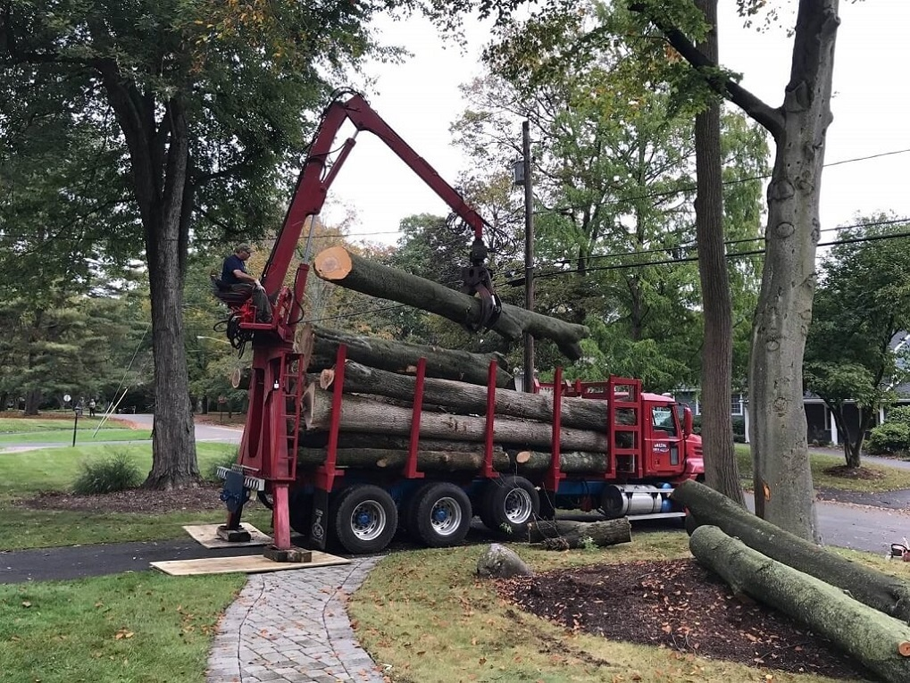 Commercial Tree Services-Charleston Tree Trimming and Stump Grinding Services-We Offer Tree Trimming Services, Tree Removal, Tree Pruning, Tree Cutting, Residential and Commercial Tree Trimming Services, Storm Damage, Emergency Tree Removal, Land Clearing, Tree Companies, Tree Care Service, Stump Grinding, and we're the Best Tree Trimming Company Near You Guaranteed!