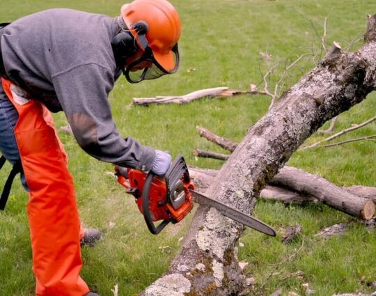 Emergency Tree Removal-Charleston Tree Trimming and Stump Grinding Services-We Offer Tree Trimming Services, Tree Removal, Tree Pruning, Tree Cutting, Residential and Commercial Tree Trimming Services, Storm Damage, Emergency Tree Removal, Land Clearing, Tree Companies, Tree Care Service, Stump Grinding, and we're the Best Tree Trimming Company Near You Guaranteed!