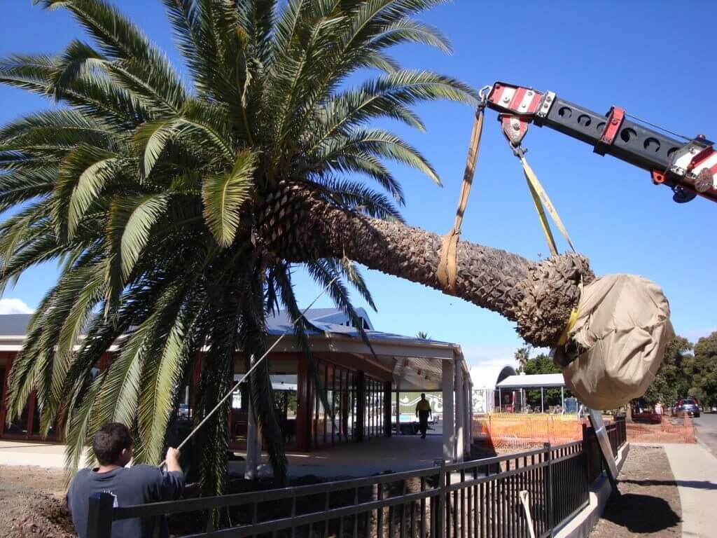 Palm Tree Removal-Charleston Tree Trimming and Stump Grinding Services-We Offer Tree Trimming Services, Tree Removal, Tree Pruning, Tree Cutting, Residential and Commercial Tree Trimming Services, Storm Damage, Emergency Tree Removal, Land Clearing, Tree Companies, Tree Care Service, Stump Grinding, and we're the Best Tree Trimming Company Near You Guaranteed!