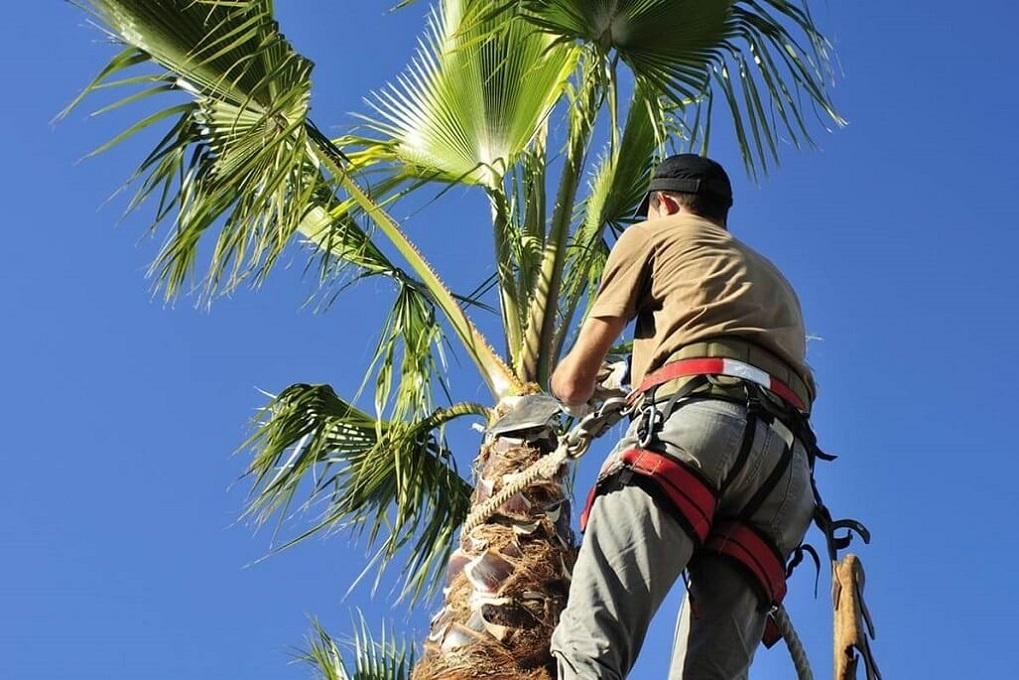 Palm Tree Trimming-Charleston Tree Trimming and Stump Grinding Services-We Offer Tree Trimming Services, Tree Removal, Tree Pruning, Tree Cutting, Residential and Commercial Tree Trimming Services, Storm Damage, Emergency Tree Removal, Land Clearing, Tree Companies, Tree Care Service, Stump Grinding, and we're the Best Tree Trimming Company Near You Guaranteed!