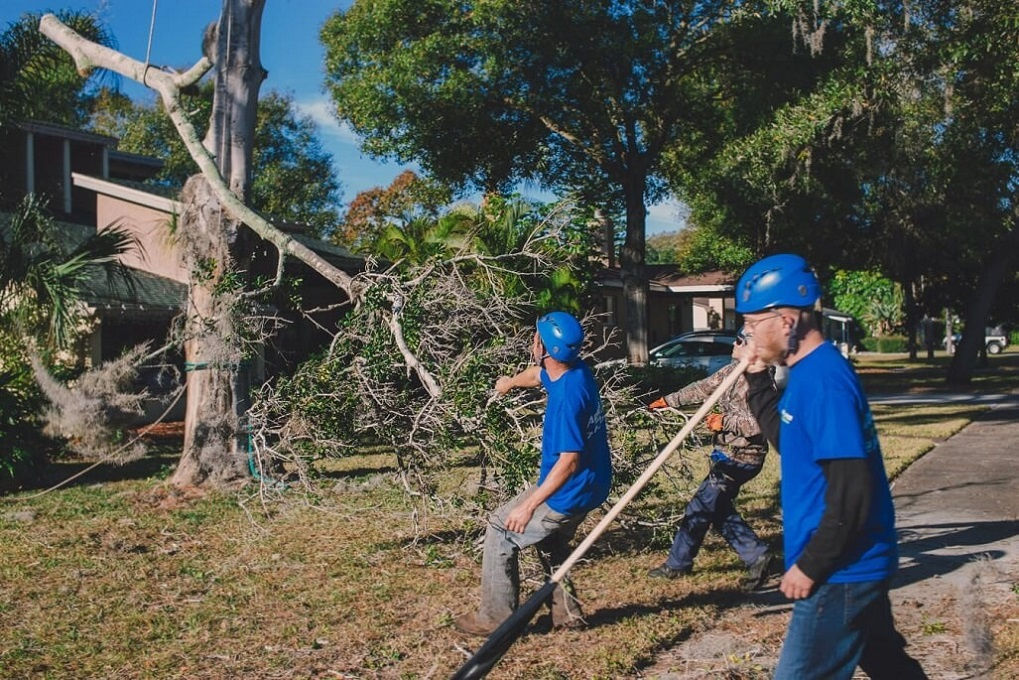 Residential Tree Services-Charleston Tree Trimming and Stump Grinding Services-We Offer Tree Trimming Services, Tree Removal, Tree Pruning, Tree Cutting, Residential and Commercial Tree Trimming Services, Storm Damage, Emergency Tree Removal, Land Clearing, Tree Companies, Tree Care Service, Stump Grinding, and we're the Best Tree Trimming Company Near You Guaranteed!