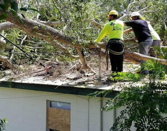Storm Damage-Charleston Tree Trimming and Stump Grinding Services-We Offer Tree Trimming Services, Tree Removal, Tree Pruning, Tree Cutting, Residential and Commercial Tree Trimming Services, Storm Damage, Emergency Tree Removal, Land Clearing, Tree Companies, Tree Care Service, Stump Grinding, and we're the Best Tree Trimming Company Near You Guaranteed!