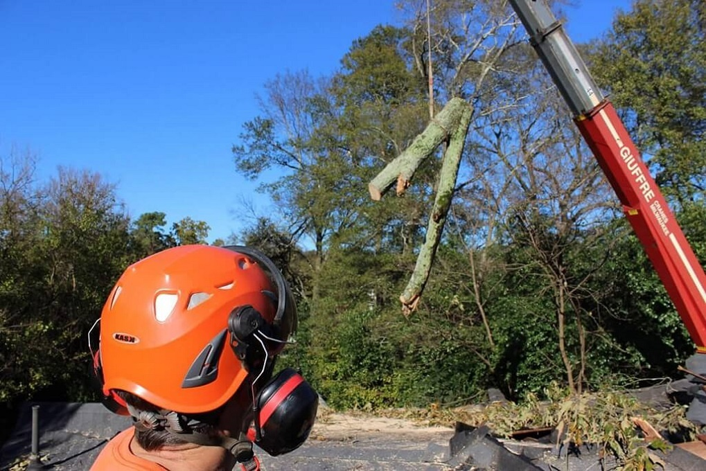 Tree Cutting-Charleston Tree Trimming and Stump Grinding Services-We Offer Tree Trimming Services, Tree Removal, Tree Pruning, Tree Cutting, Residential and Commercial Tree Trimming Services, Storm Damage, Emergency Tree Removal, Land Clearing, Tree Companies, Tree Care Service, Stump Grinding, and we're the Best Tree Trimming Company Near You Guaranteed!