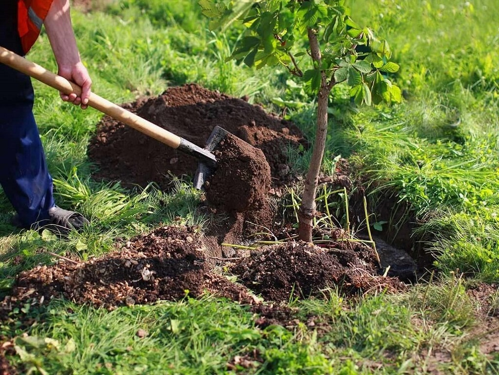 Tree Planting-Charleston Tree Trimming and Stump Grinding Services-We Offer Tree Trimming Services, Tree Removal, Tree Pruning, Tree Cutting, Residential and Commercial Tree Trimming Services, Storm Damage, Emergency Tree Removal, Land Clearing, Tree Companies, Tree Care Service, Stump Grinding, and we're the Best Tree Trimming Company Near You Guaranteed!