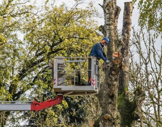 Tree Trimming-Charleston Tree Trimming and Stump Grinding Services-We Offer Tree Trimming Services, Tree Removal, Tree Pruning, Tree Cutting, Residential and Commercial Tree Trimming Services, Storm Damage, Emergency Tree Removal, Land Clearing, Tree Companies, Tree Care Service, Stump Grinding, and we're the Best Tree Trimming Company Near You Guaranteed!