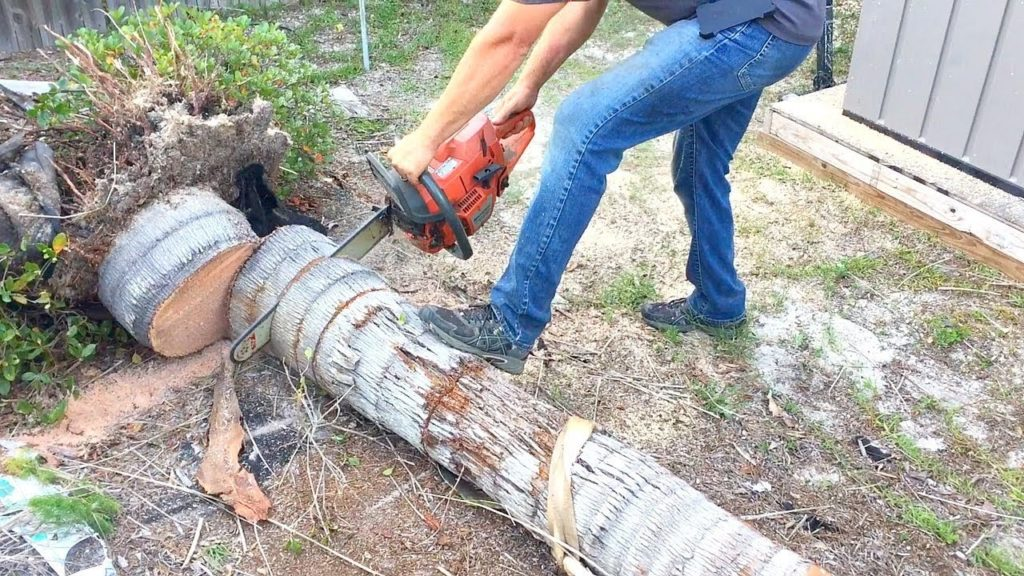 Charleston-Charleston Tree Trimming and Stump Grinding Services-We Offer Tree Trimming Services, Tree Removal, Tree Pruning, Tree Cutting, Residential and Commercial Tree Trimming Services, Storm Damage, Emergency Tree Removal, Land Clearing, Tree Companies, Tree Care Service, Stump Grinding, and we're the Best Tree Trimming Company Near You Guaranteed!