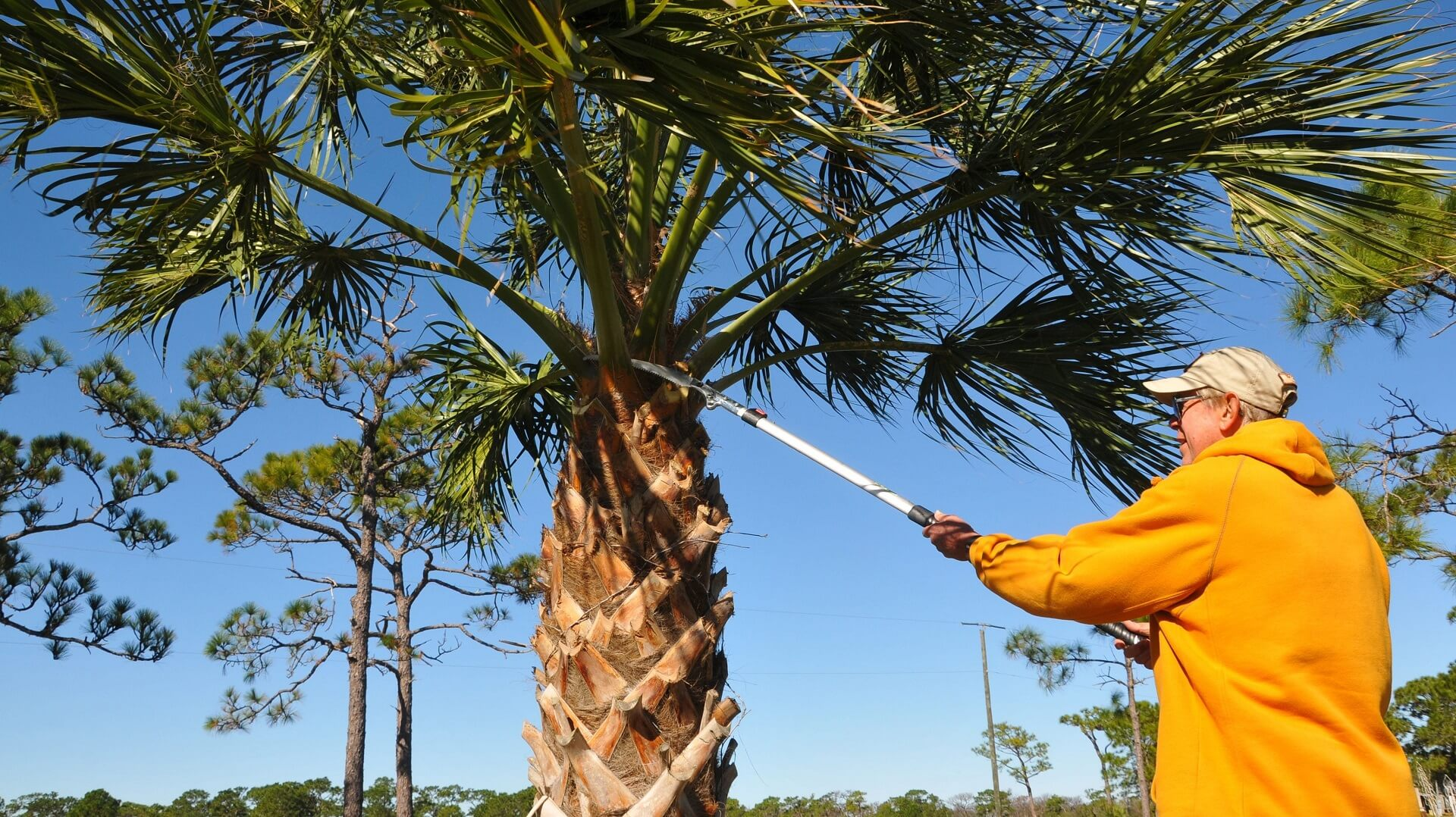 Goose Creek-Charleston Tree Trimming and Stump Grinding Services-We Offer Tree Trimming Services, Tree Removal, Tree Pruning, Tree Cutting, Residential and Commercial Tree Trimming Services, Storm Damage, Emergency Tree Removal, Land Clearing, Tree Companies, Tree Care Service, Stump Grinding, and we're the Best Tree Trimming Company Near You Guaranteed!